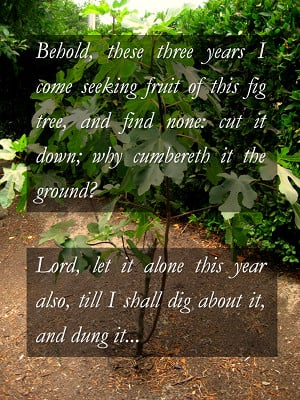 The Fruitless Fig Tree